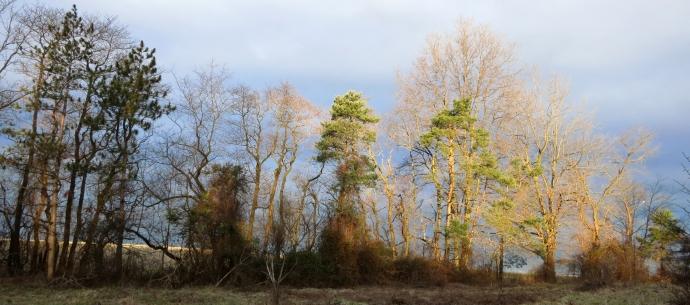 treelinesun.jpg