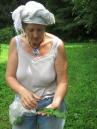 Chicory lesson