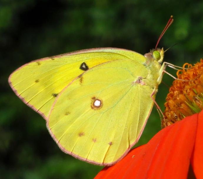 yellowgreeneyes