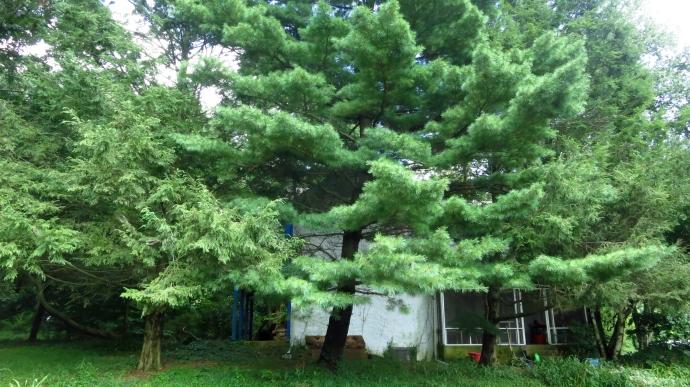 treesonhouse