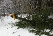 Snow + ice breaks branches