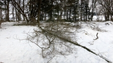 ...many branches...