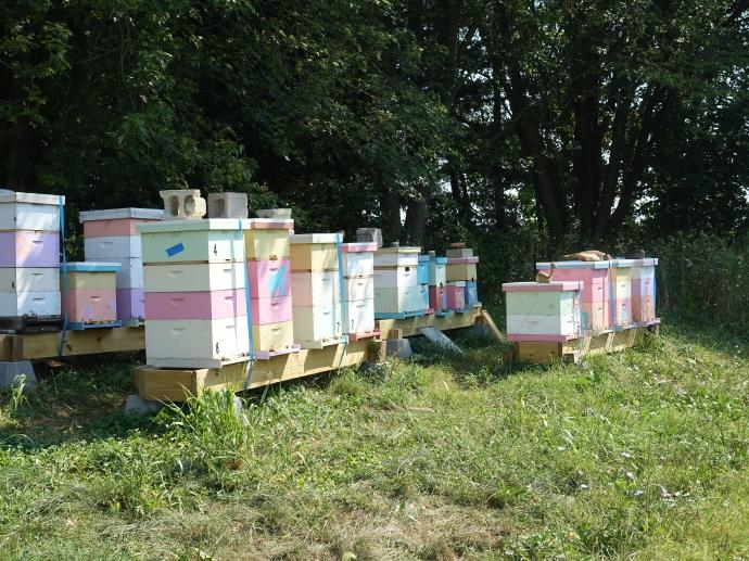 apiary